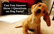 Can You Answer these 7 Questions on Dog Facts Thats My Top 10