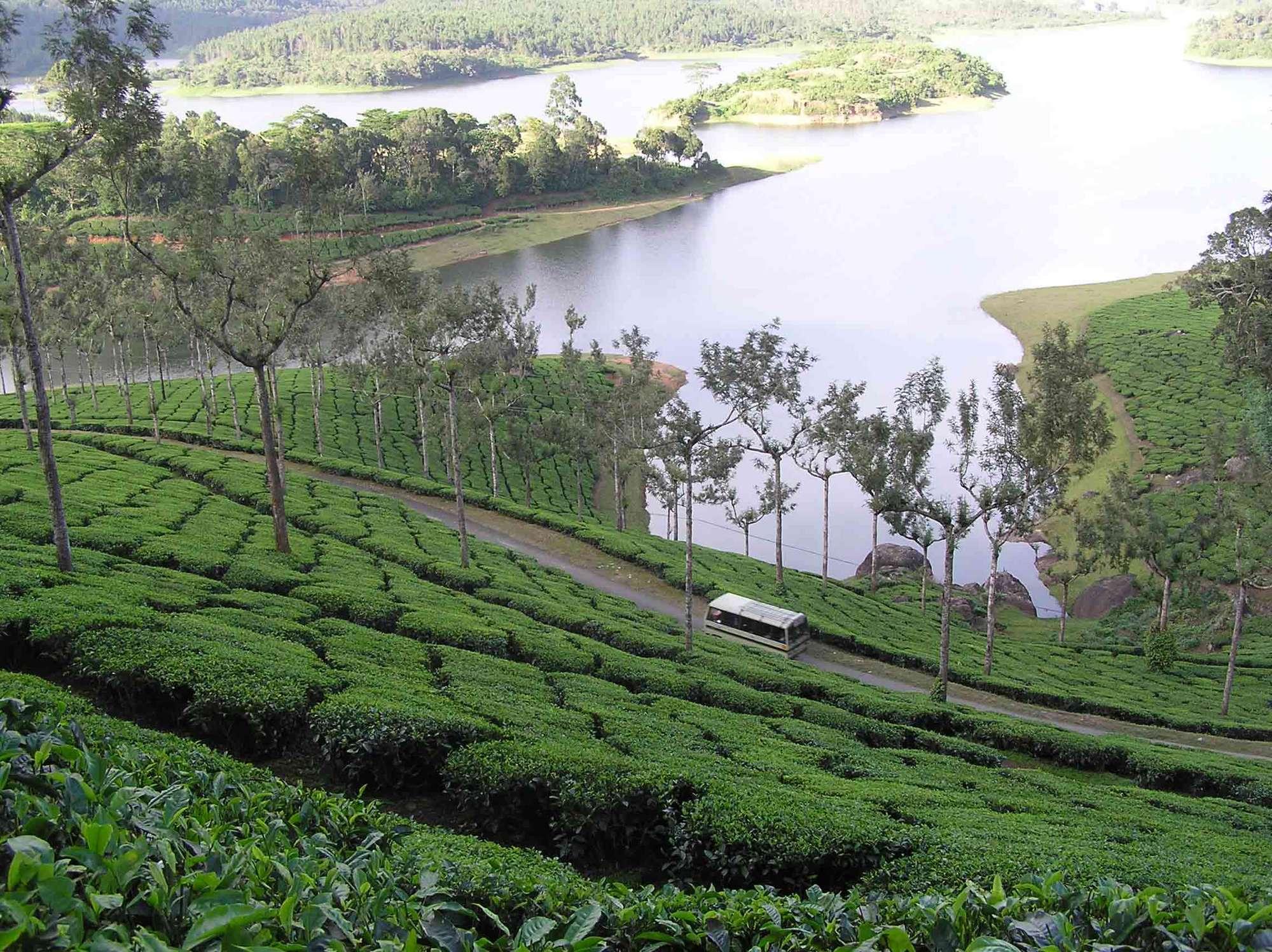Munnar - Top 10 Places To Visit In Kerala